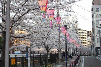 大岡川桜まつり2019