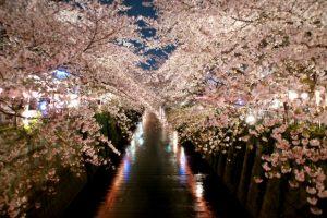 目黒川の桜ライトアップ
