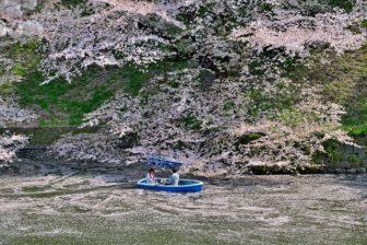 千鳥ヶ淵桜ボート