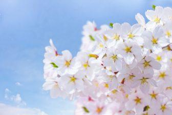 赤城南面千本桜まつり2018