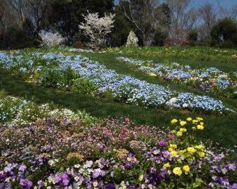 里山ガーデン2020大花壇