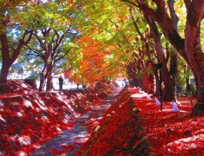 富士河口湖紅葉まつり2019の日程