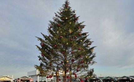 クリスマスマーケット 赤レンガ もみの木