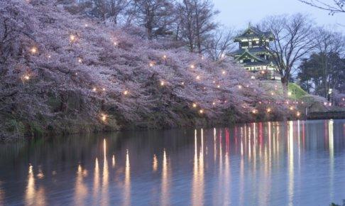 新潟 高田公園 桜