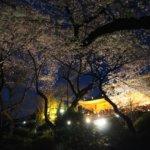 上野公園 桜 2019 ライトアップ