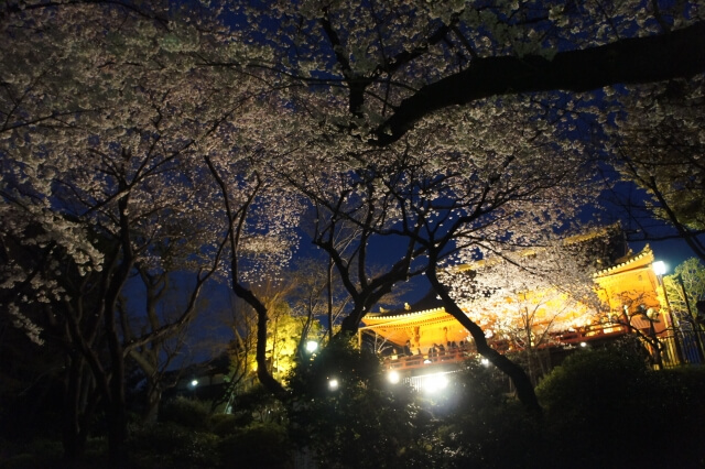 上野公園 桜 2020 ライトアップ