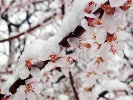 花冷えの候の意味や時期は?