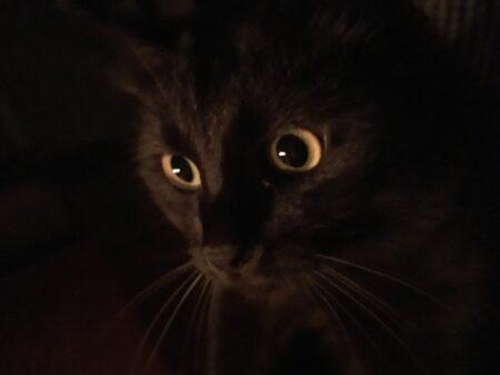 黒猫は縁起が良い?悪い?