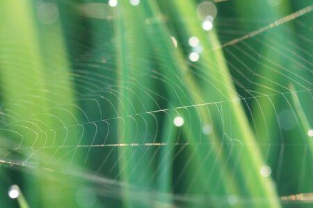 夜の蜘蛛は縁起が良い?悪い?